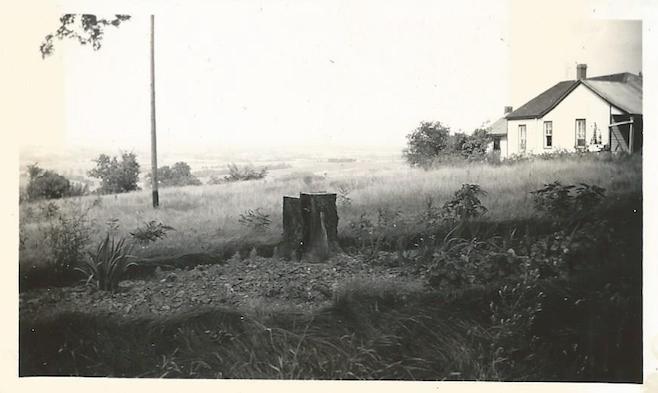 stump crop